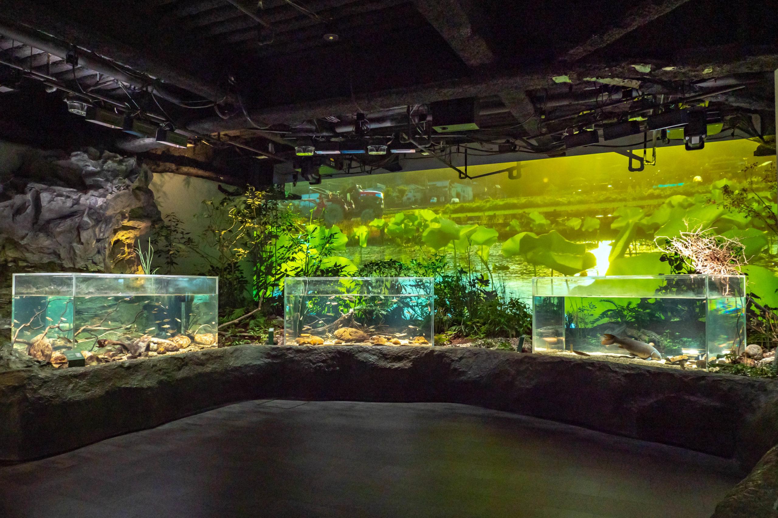 LEDビジョン,LEDディスプレイ,システム,カワスイ,川崎水族館,プロジェクター