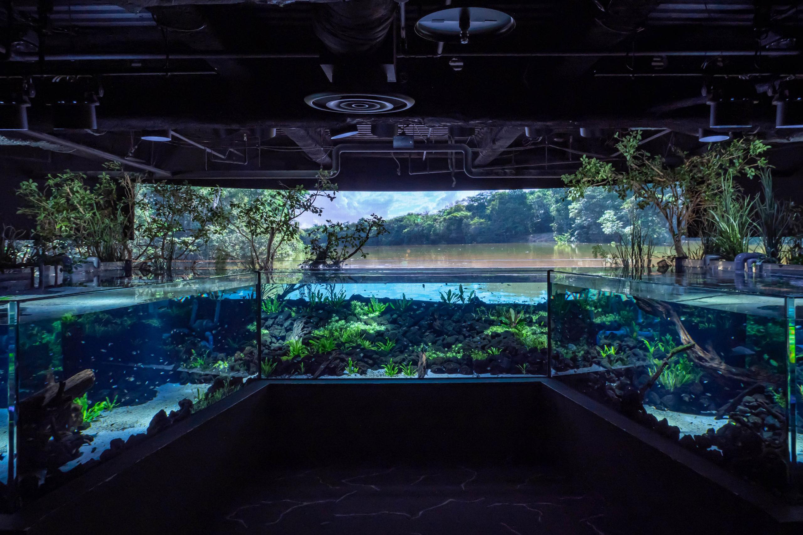カワスイ,川崎水族館,パンタナルエリア