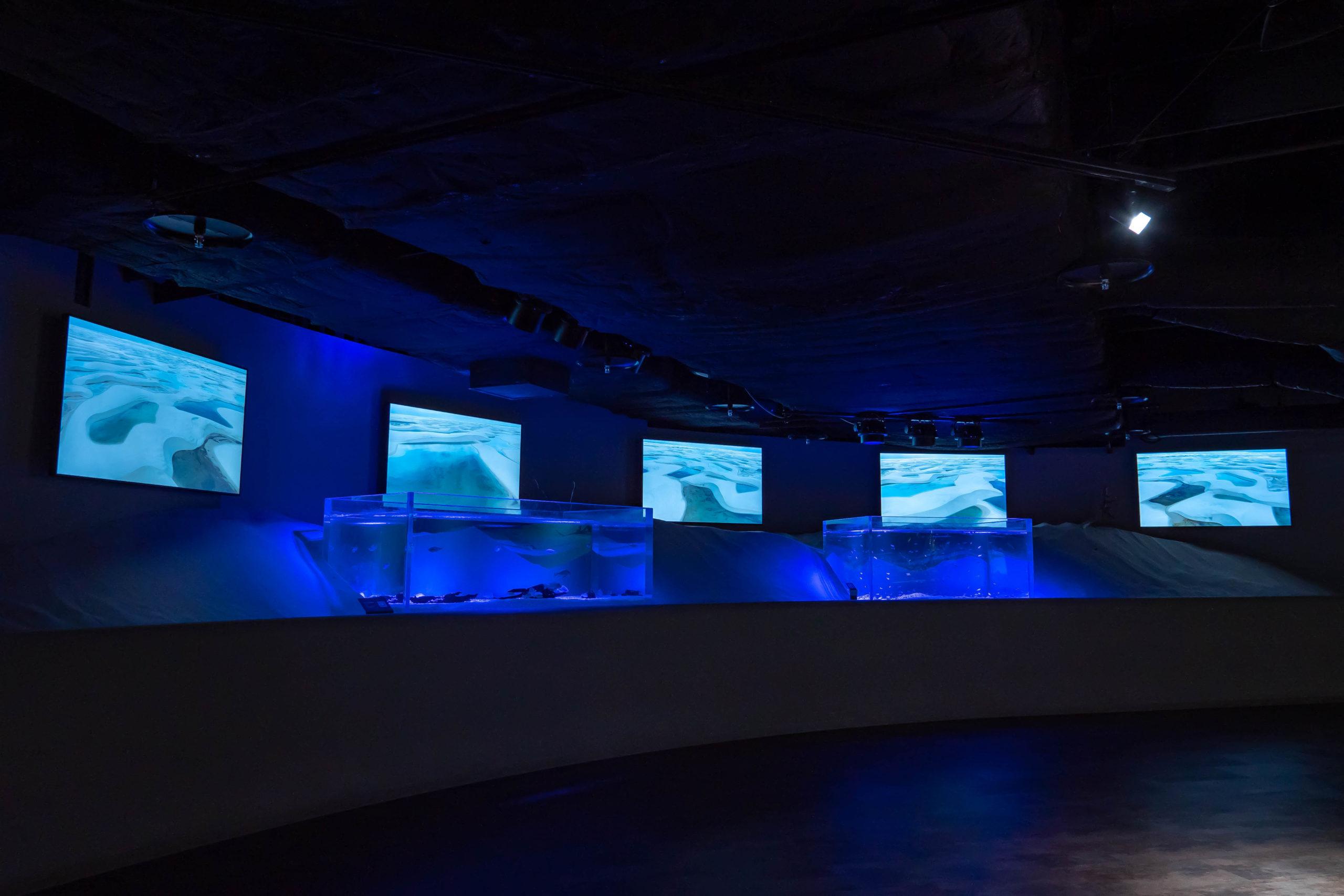 カワスイ,川崎水族館,レイソイスエリア